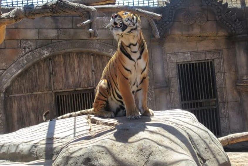 Indlæs billede 2 af 8. Ticket to the Zoo Cocodrilo Park in Agüimes