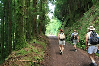 Hiking group on a forest road on Sao Miguel Island