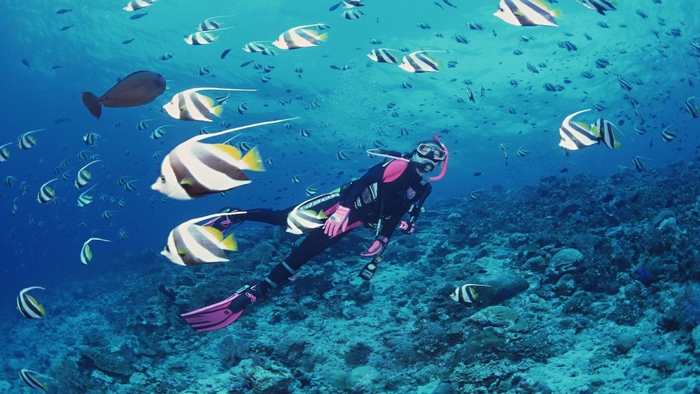 Show item 10 of 10. Woman snorkeling in Phu Quoc