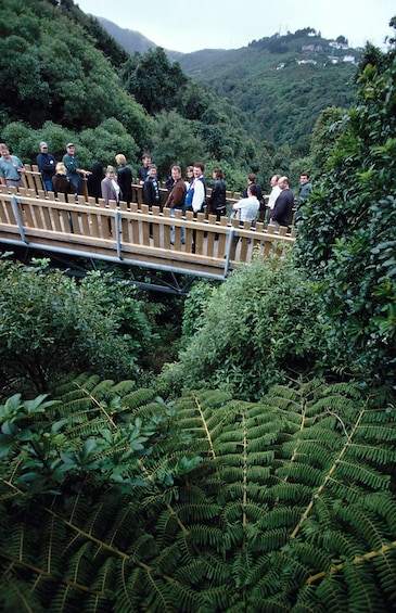 Show item 2 of 6. Group on an Eco-trek bush walk of Otari-Wilton's Bush