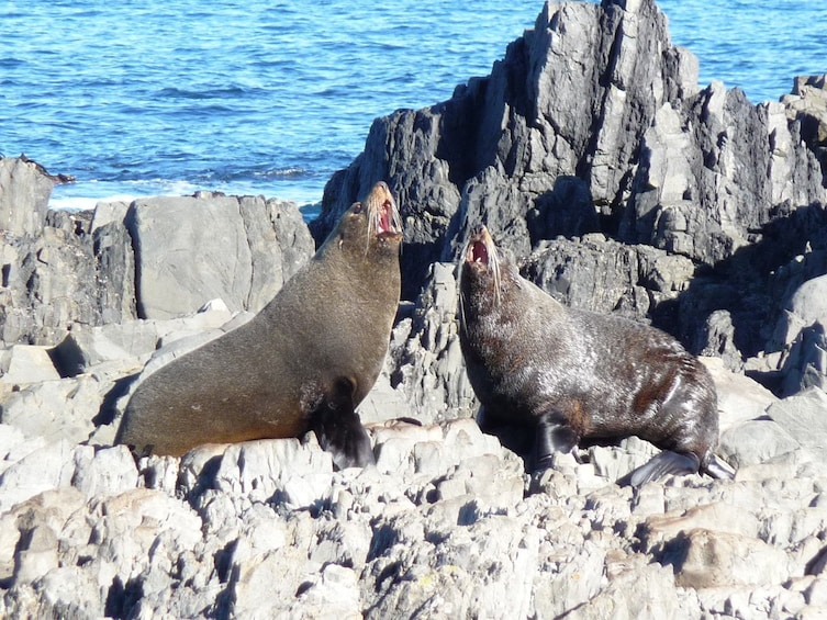 Show item 1 of 6. Two seals in Wellington