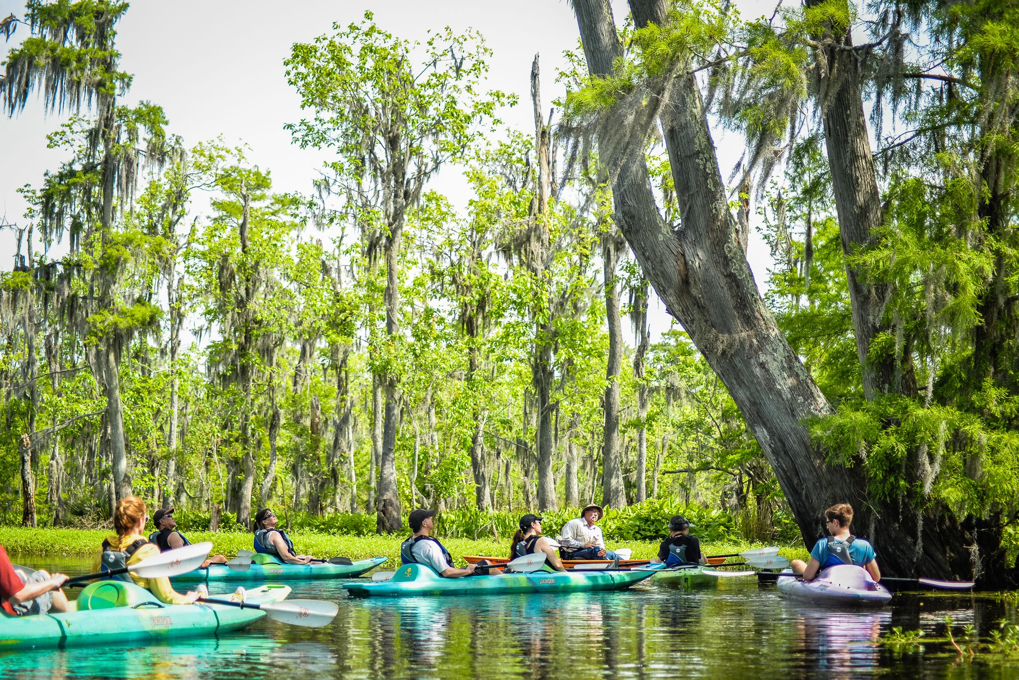 New Orleans guided kayaking swamp tour