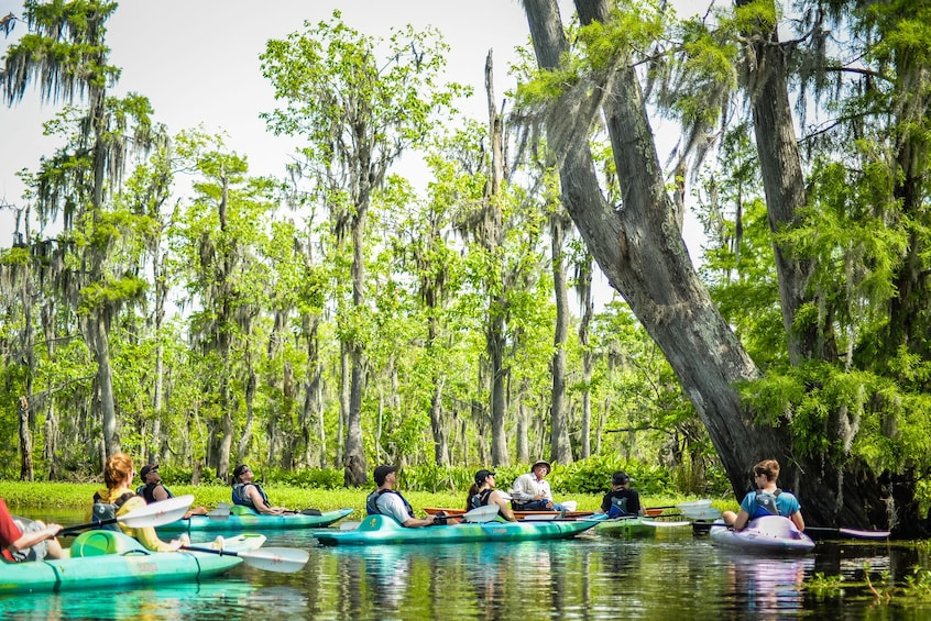 Show item 2 of 5. New Orleans guided kayaking swamp tour