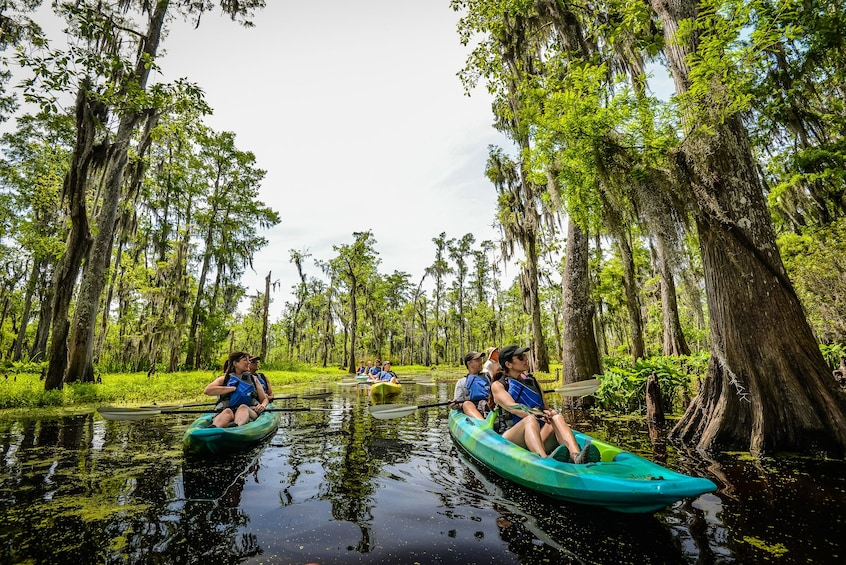 Show item 1 of 5. Group kayaking in a swamp in New Orleans