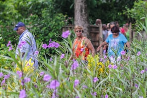 Local Green Market Plantation Tour