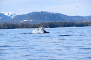 Sitka's Best Whale Watching & Marine Wildlife Tour
