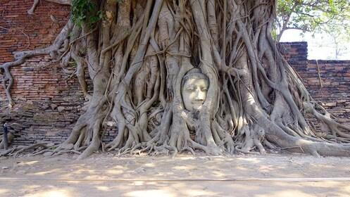 Buddha head in tree roots at Ayutthaya Kingdom