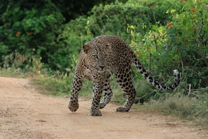 Yala National Park Morning Safari