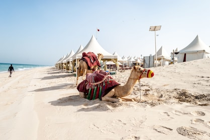 Camels on the beach in Doha