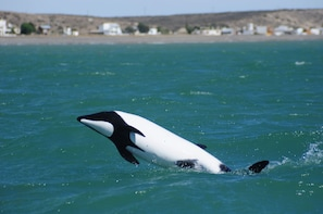 Penguins and Dolphins Watching at Punta Tombo Tour