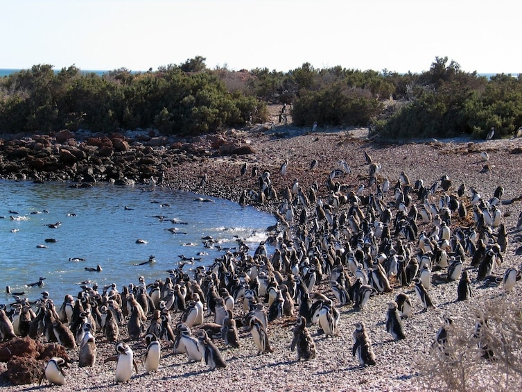 Show item 3 of 9. Penguin colony in South America