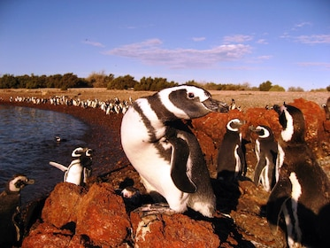 Close-up of a penguin colony in South America