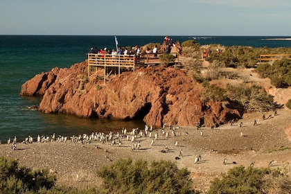 Penguins and Dolphins Watching at Punta Tombo Tour 12.jpg