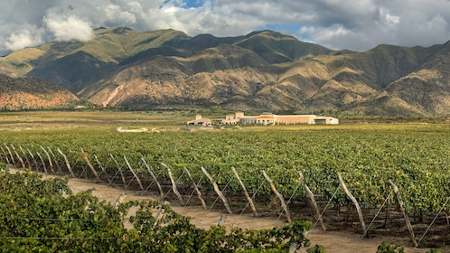 Full-Day Cafayate Sightseeing Tour with Wine Tasting 07.jpg