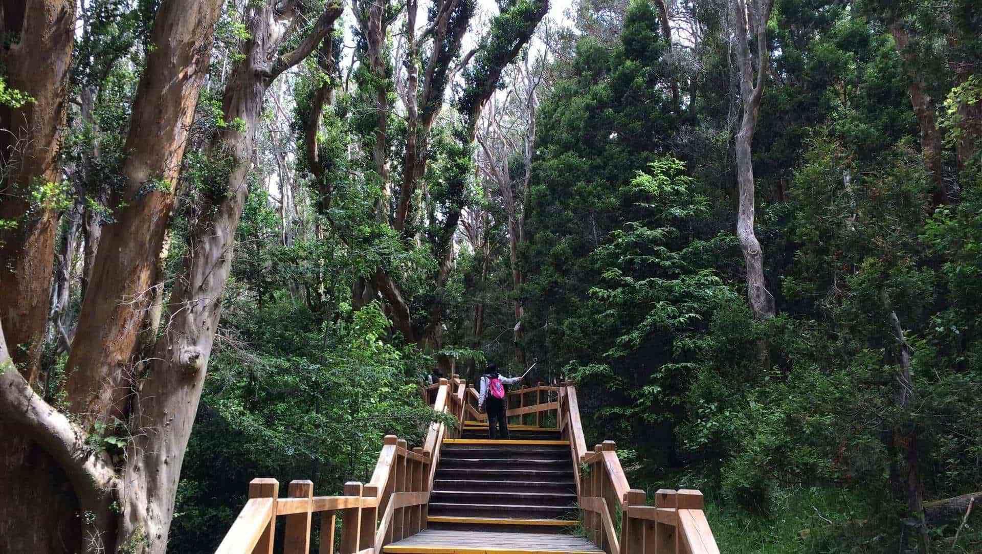 Victoria Island & Myrtle Forest Boat Tour