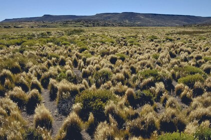 Turismo-Estepa-Patagonica-55.jpg