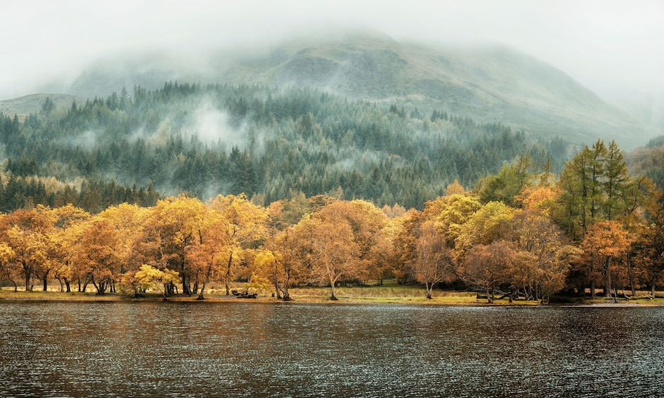Lake and forest in Ireland