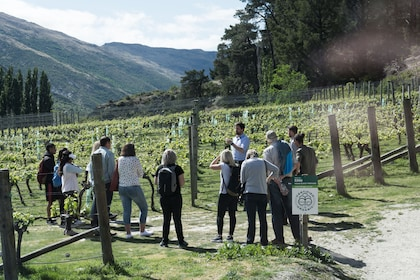 Group touring a vineyard in the 'Valley of the Vines'