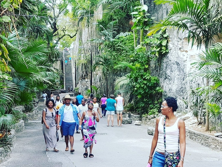 Show item 10 of 10. Group walking near tropical plants in the Bahamas