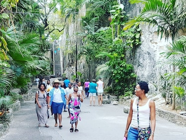Group walking near tropical plants in the Bahamas