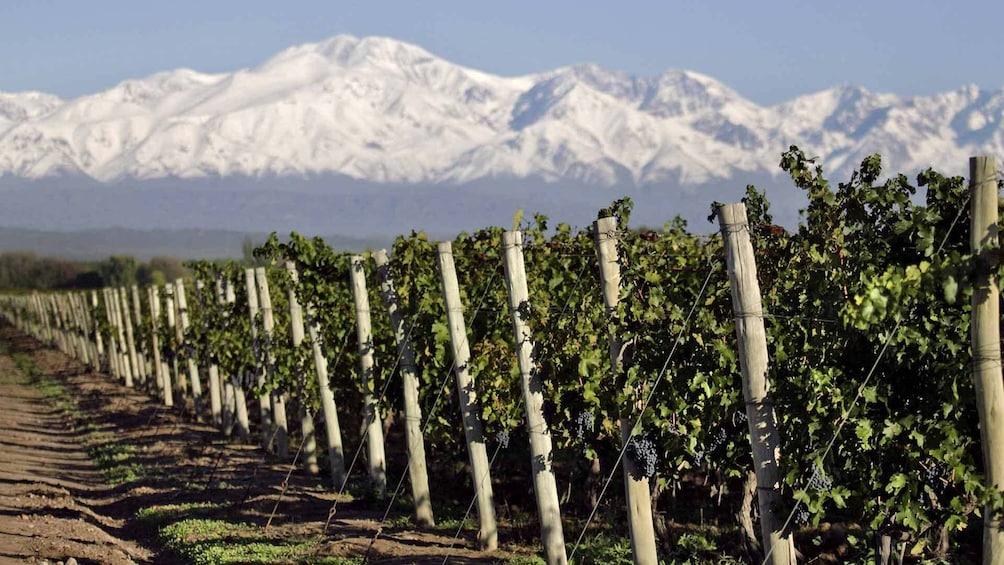 Half-Day Wineries Tour with Wine Tasting in Mendoza