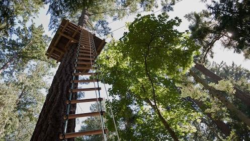 Zipline platform at WildPlay Thacher's Adventure Courses in Voorheesville