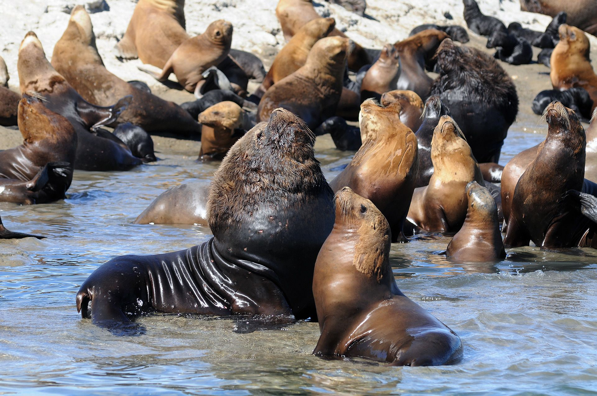 Puerto Madryn City Tour & Sea Lions at Punta Loma