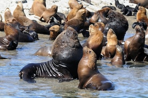 Puerto Madryn City Tour & Sea Lions at Punta Loma