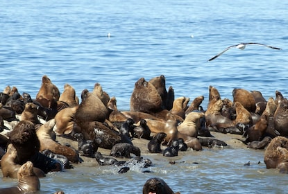Puerto Madryn City Tour & Sea Lions at Punta Loma 08.jpg