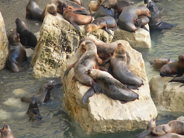 Puerto Madryn City Tour & Sea Lions at Punta Loma 05.jpg