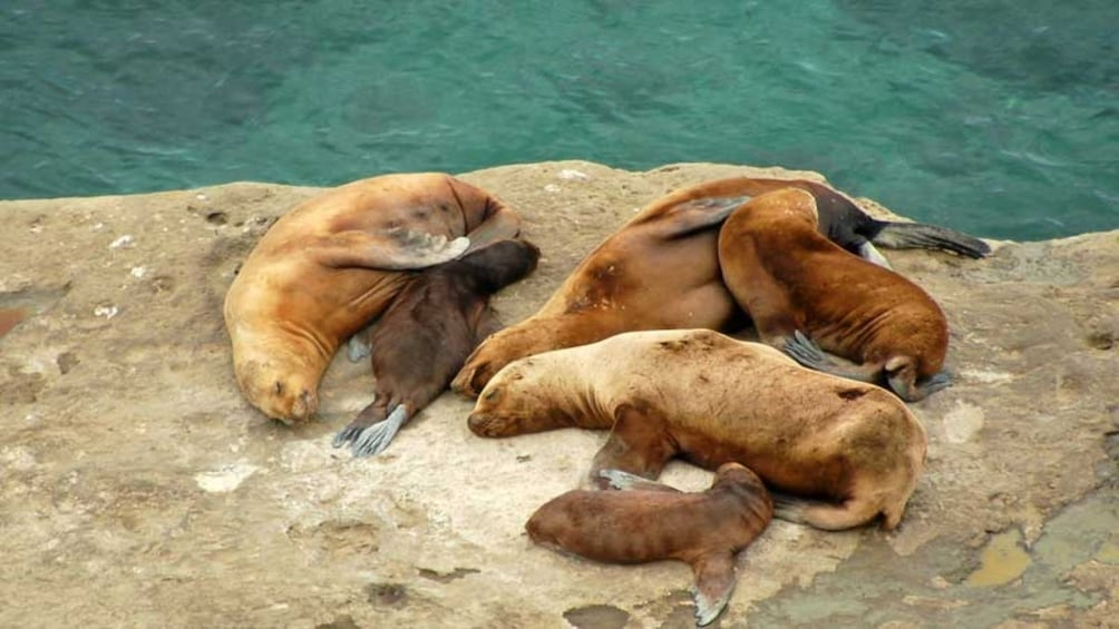 Show item 9 of 9. Puerto Madryn City Tour & Sea Lions at Punta Loma