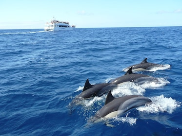 Whale & Dolphin watching tour in Mirissa