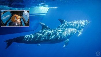 Dolphin & Whale Watching Eco-Safari with Underwater Viewing
