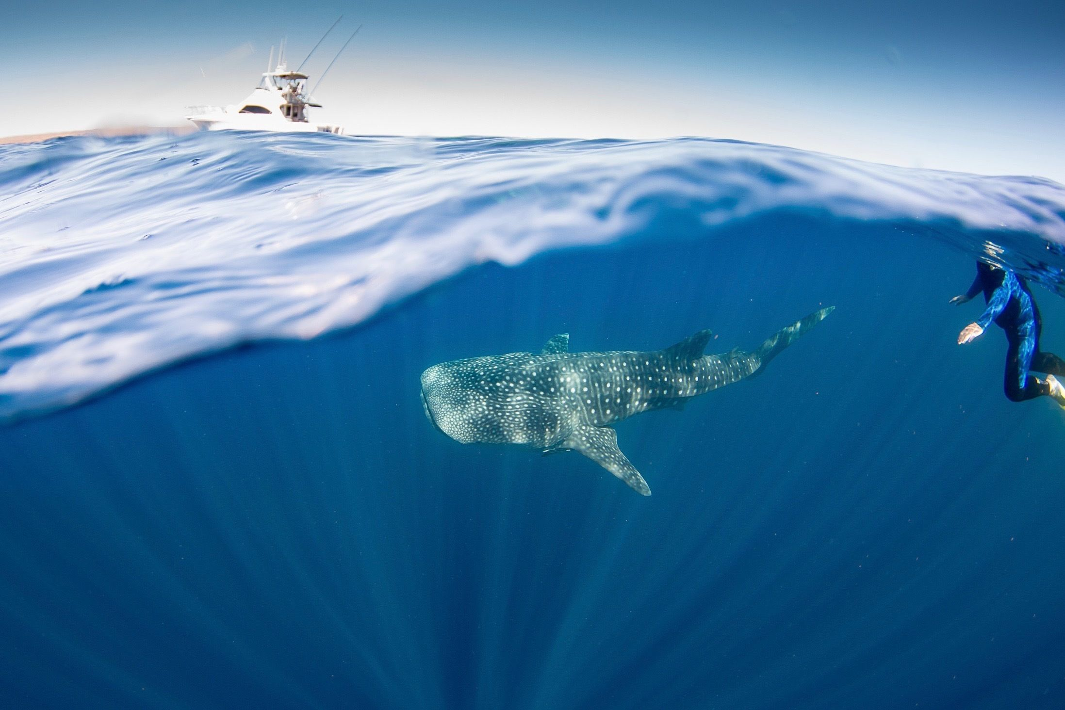 Swim with Whale Sharks and Adventure Day Tour