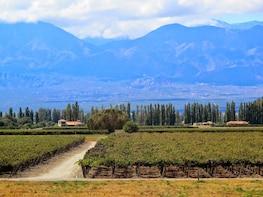 Premium Cafayate Wine Route