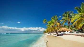 Full Day Caribbean Saona Island by Catamaran and Speed Boat