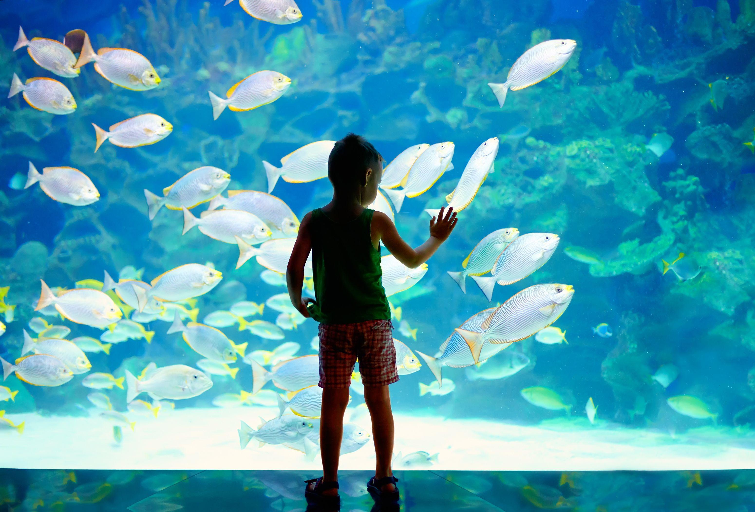 Child exploring at the Aquarium in Monaco