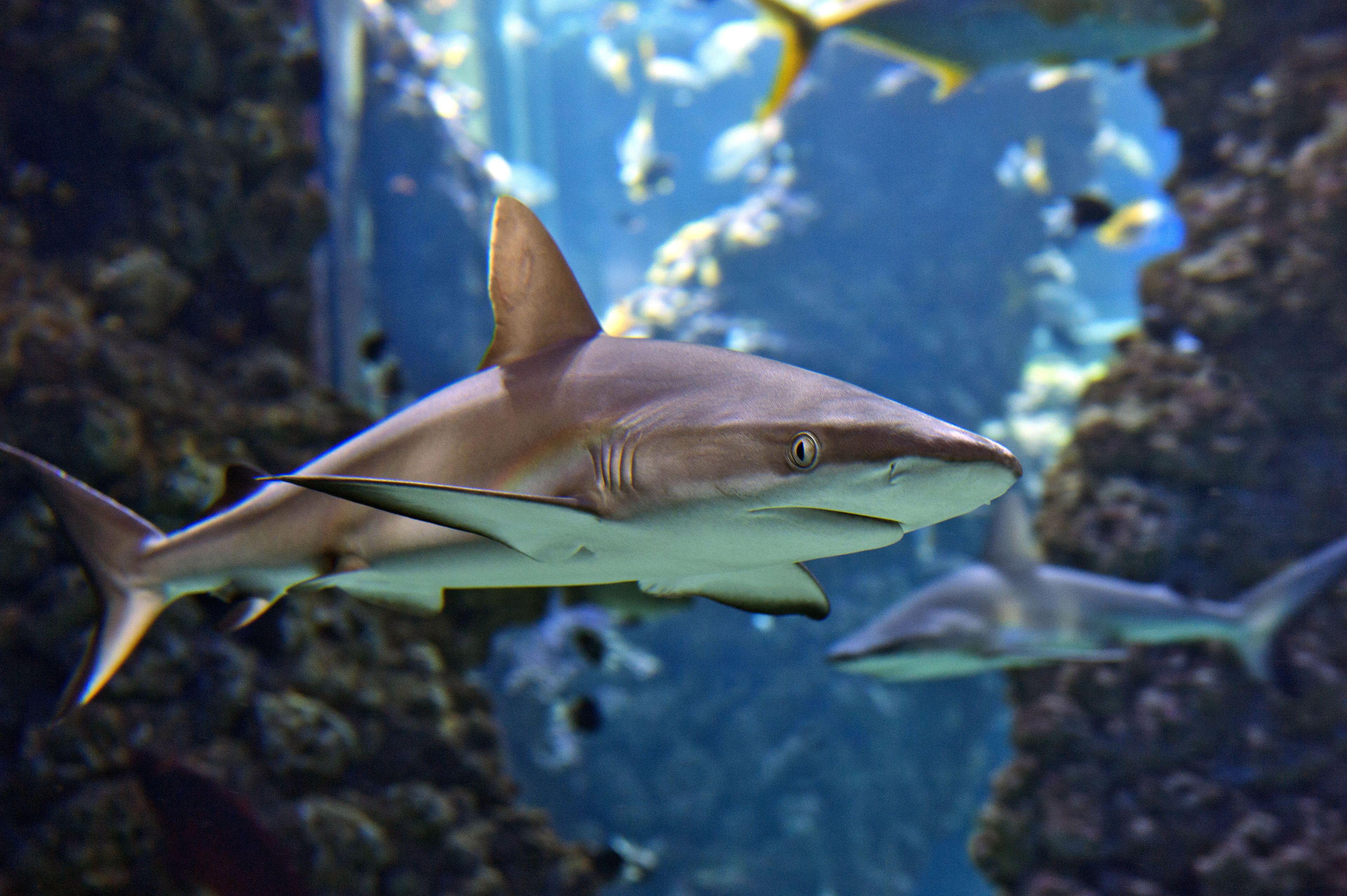 Tropical fish and sharks at the Monaco Oceanographic Museum and Aquarium