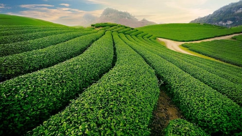 Sapa rice paddy fields