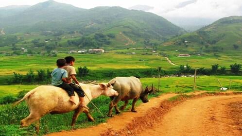 Local children riding animals in Sapa