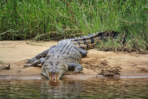 Crocodile Express One Hour Rainforest and Wildlife Cruise