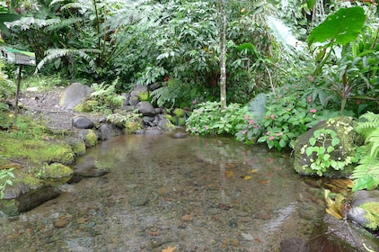 Stream in Tahitian park