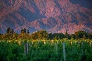 Cafayate Wine Route Tour & Tasting