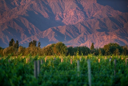 02-argentina-wine-regions-salta-and-uco-valley.jpg