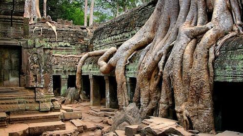 cambodia-picture_010418207_134.jpg
