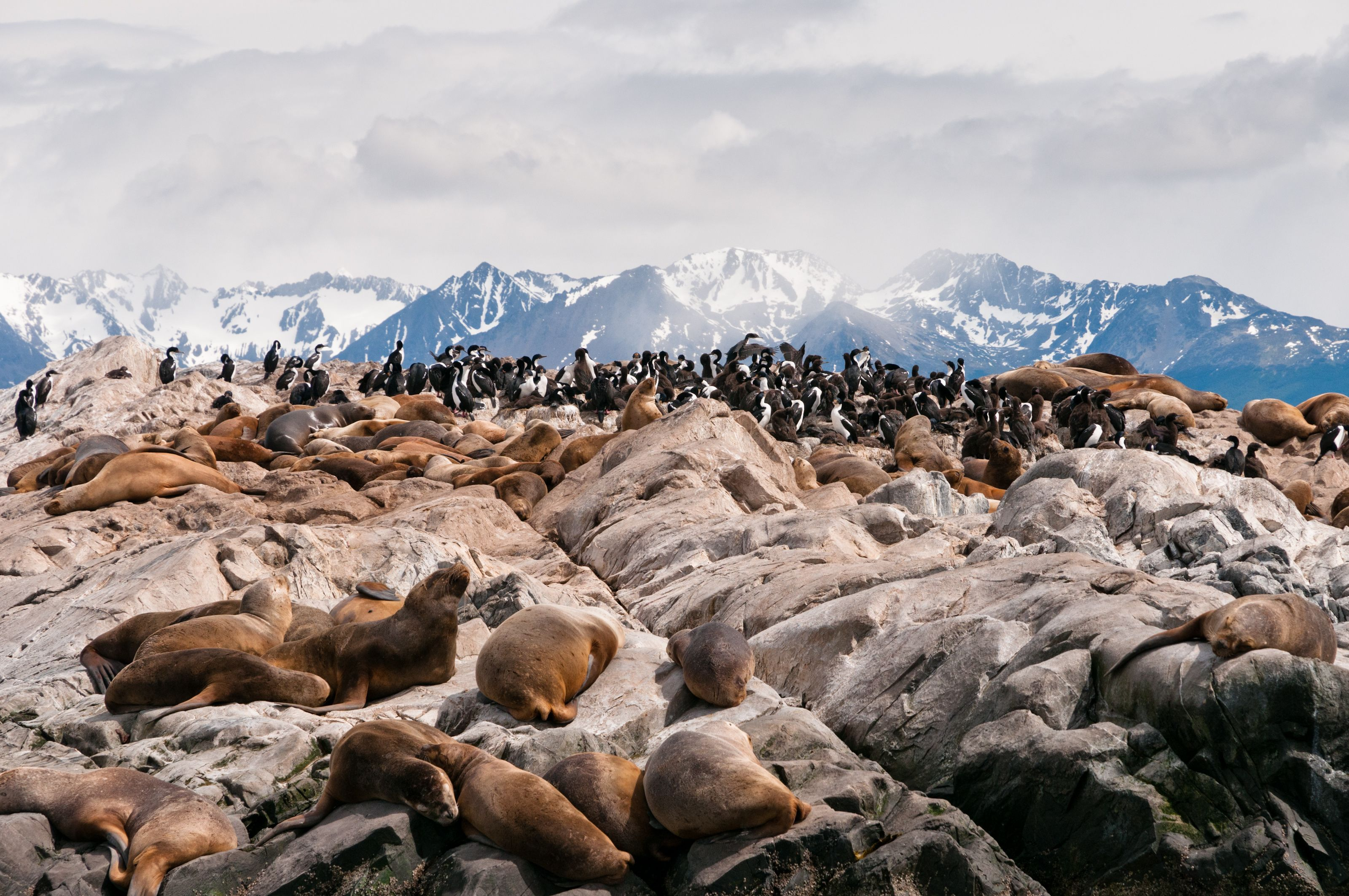 Beagle Channel Boat Tour with Sea Lions Island