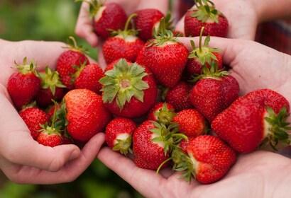 Strawberries in Perth
