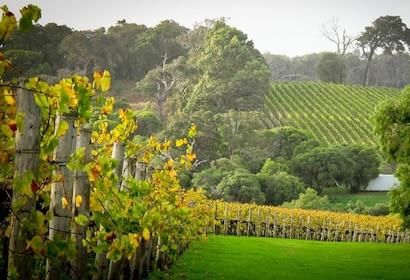 Vineyard in Perth