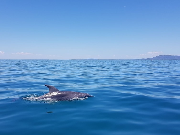 Show item 4 of 10. Dolphin Cruise, Seal Swim and Reef Snorkel Adventure
