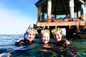 Dolphin Cruise, Seal Swim and Reef Snorkel Adventure